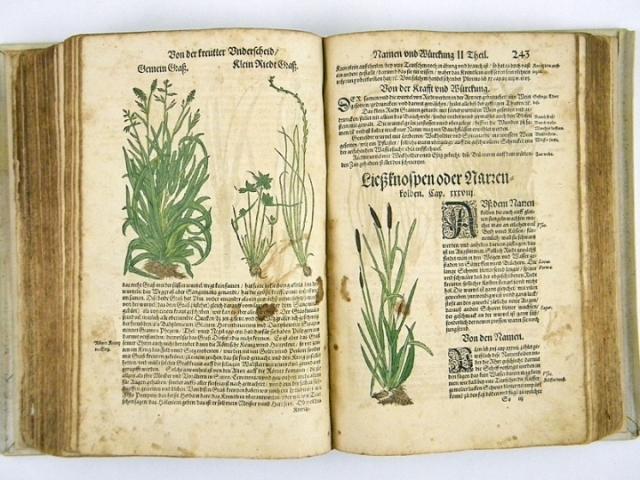Hieronymus Bock HIERONYMUS BOCK KREUTTERBUCH HERBAL BOOK 1577